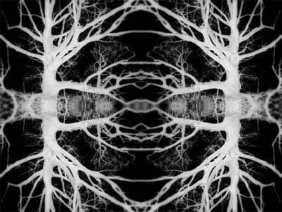 Tree Kaleidescope  Poster