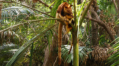 Tree Kangaroo 2 Poster by Gary Crockett
