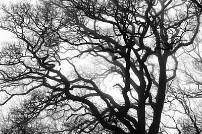 Tree Mist Poster