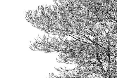 Tree No. 7-2 Poster