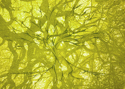 Poster featuring the mixed media Tree Of Life by Rachel Hames