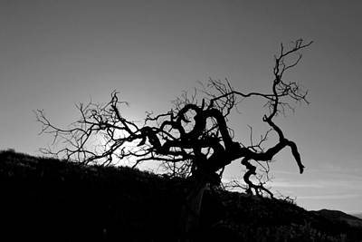 Poster featuring the photograph Tree Of Light Silhouette Hillside - Black And White  by Matt Harang