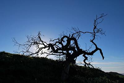 Poster featuring the photograph Tree Of Light Silhouette Hillside by Matt Harang