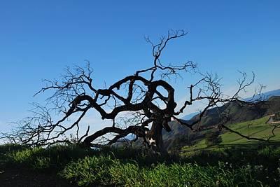 Poster featuring the photograph Tree Of Light - Slanted Horizon by Matt Harang
