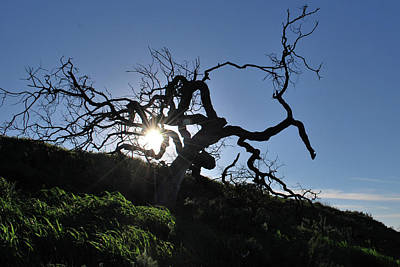 Poster featuring the photograph Tree Of Light - Sunshine Through Branches by Matt Harang
