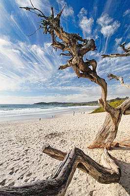 Tree On A Beach Carmel By The Sea California Poster by George Oze