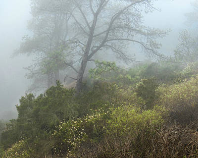 Tree On A Foggy Hill Poster