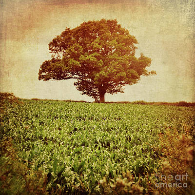 Poster featuring the photograph Tree On Edge Of Field by Lyn Randle