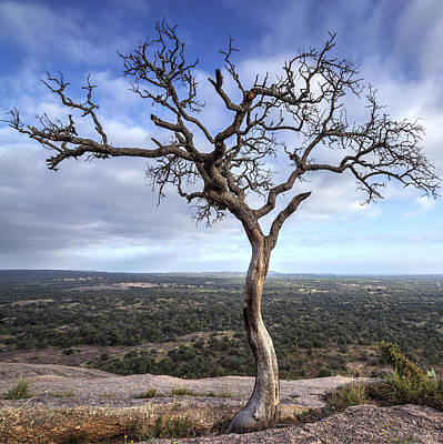 Tree On Enchanted Rock - Square Poster
