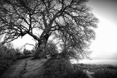 Tree On Ridge - Black And White Poster