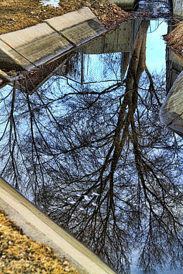 Tree Reflection From No Where Photography Image Poster