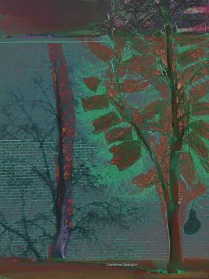 Tree Shadows At Midnight Poster