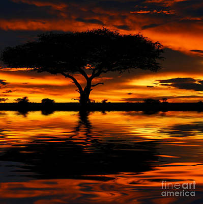 Tree Silhouette And Dramatic Sunset Poster