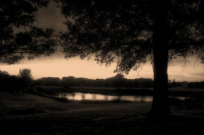 Tree Silhouette By The Pond Sepia Poster
