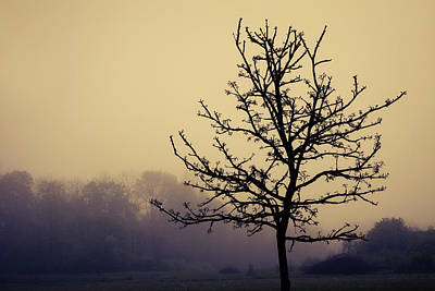 Tree Silhouette On A Foggy Morn Poster