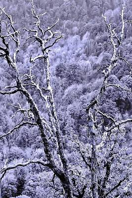 Tree Sprite Poster