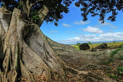 Tree Stump Poster by Jera Sky
