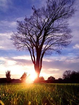 Tree Sun Lit Poster by Morgan Carter