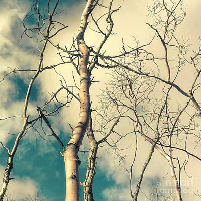 Tree Top 2 Poster by Priska Wettstein