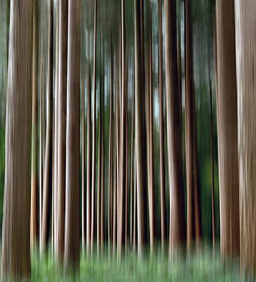 Tree Trunks Poster