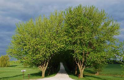 Tree Tunnel Driveway Poster by Bill Driscoll