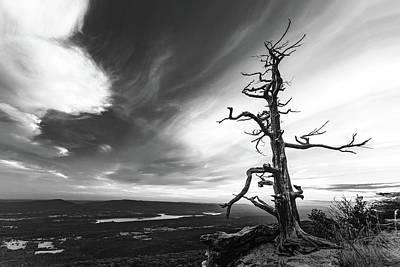 Tree Vs World Poster