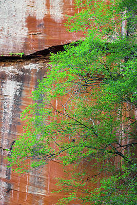 Tree With Red Canyon Wall Poster by Joseph Smith