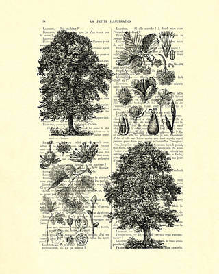 Trees And Seeds Black And White Poster by Madame Memento