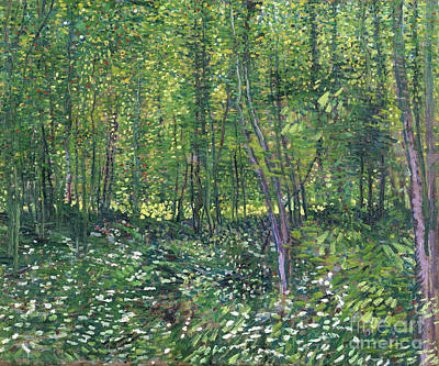 Trees And Undergrowth Poster by Van Gogh