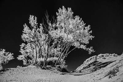 Trees At Sleeping Bear Dunes National Lakeshore Poster by Randall Nyhof