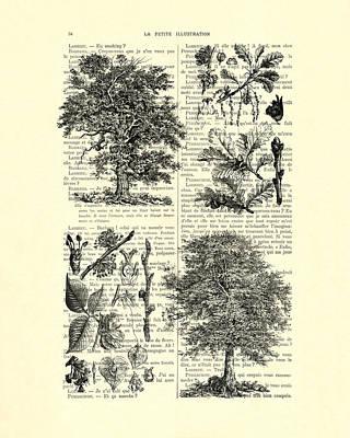 Trees Black And White Illustration Poster