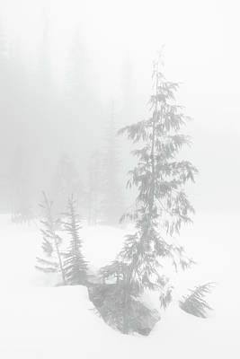 Trees In Fog Monochrome Poster