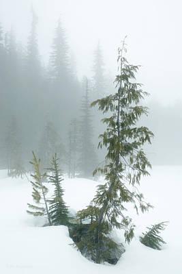 Trees In Fog Poster