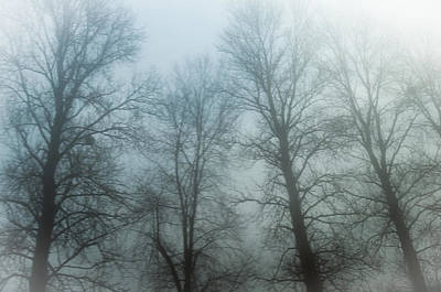 Trees In Mist Poster by Tetyana Kokhanets