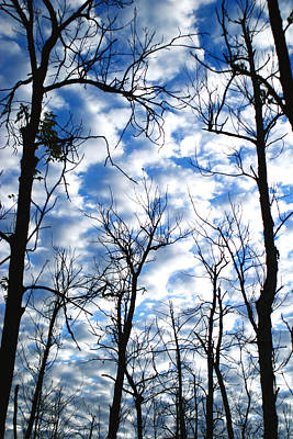Poster featuring the photograph Trees In The Sky by Shari Jardina
