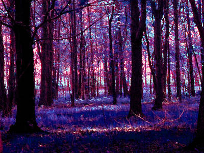 Poster featuring the photograph Trees In The Woods In Pink And Blue by Michelle Audas