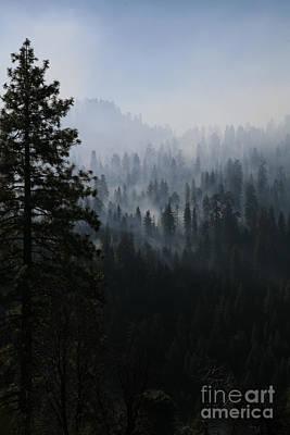 Trees In Yosemite Poster