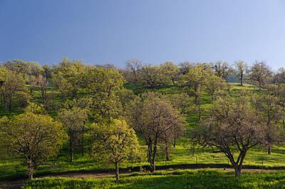 Trees On Hillside Poster