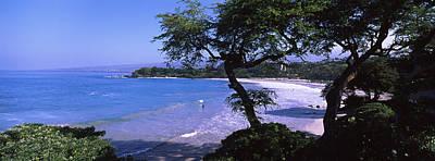 Trees On The Beach, Mauna Kea, Hawaii Poster