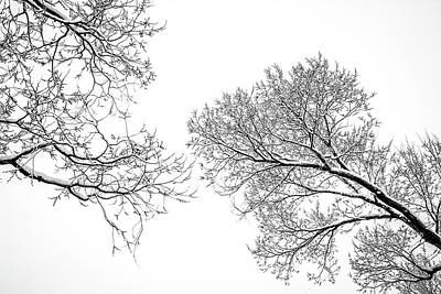 Trees Reaching Poster