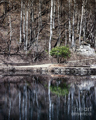 Trees Reflecting In A Pond Poster by Tom Gari Gallery-Three-Photography