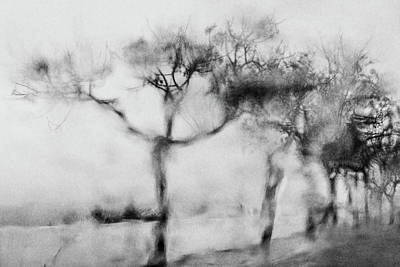 Trees Through The Window Poster by Celso Bressan
