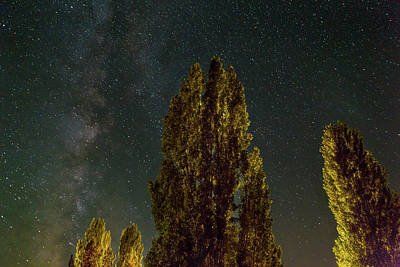 Trees Under The Milky Way On A Starry Night Poster