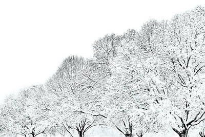 Trees With Snow Poster