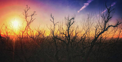 Poster featuring the photograph Treetop Silhouette - Sunset At Lapham Peak #1 by Jennifer Rondinelli Reilly - Fine Art Photography