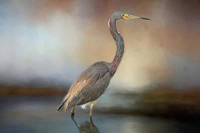 Tri-coloured Heron Poster