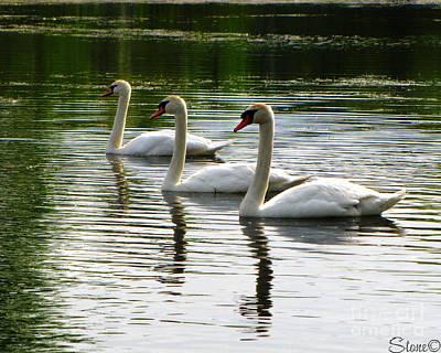 Triplet Swans Poster