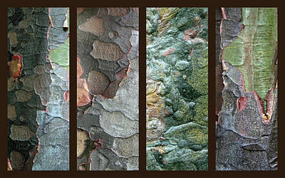 Tropical Bark Collage II Poster