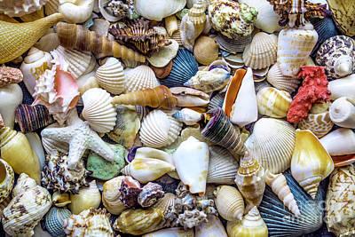 Tropical Beach Seashell Treasures 1529b Poster