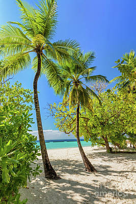 Tropical Island With Coconut Palm Trees On Sandy Beach In Maldives Poster